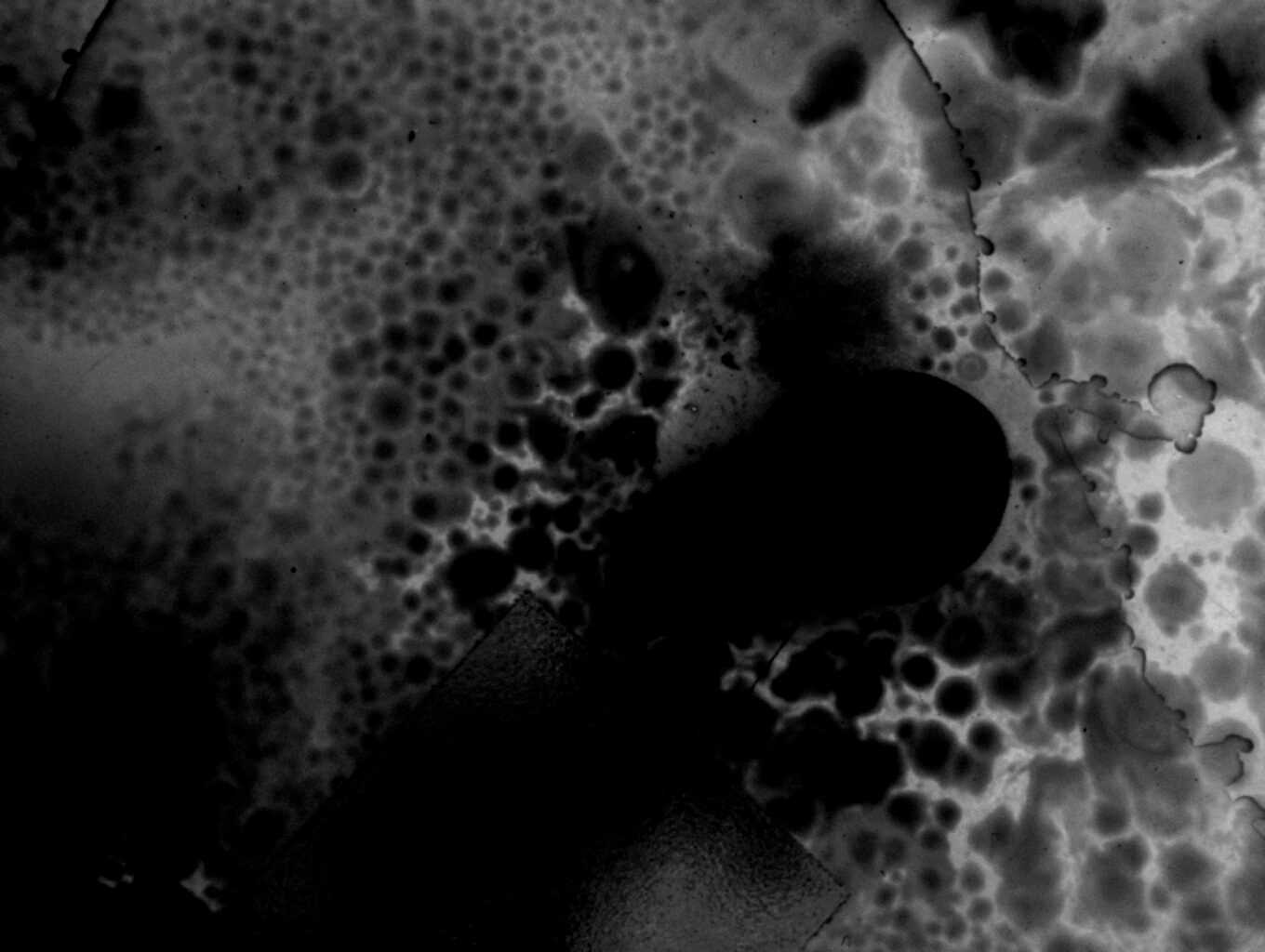 Image taken with Olympus IX51 Inverted Microscope
