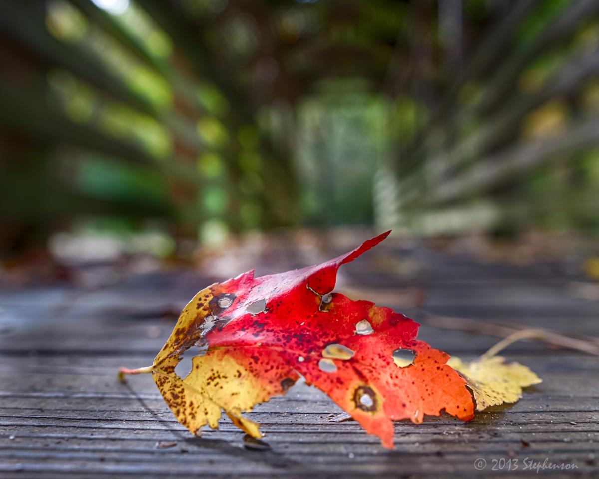 fall leaf on the bridge.jpg