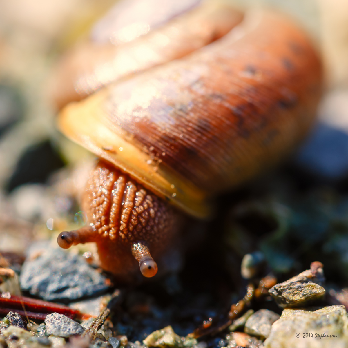 A Snails Pace.jpg