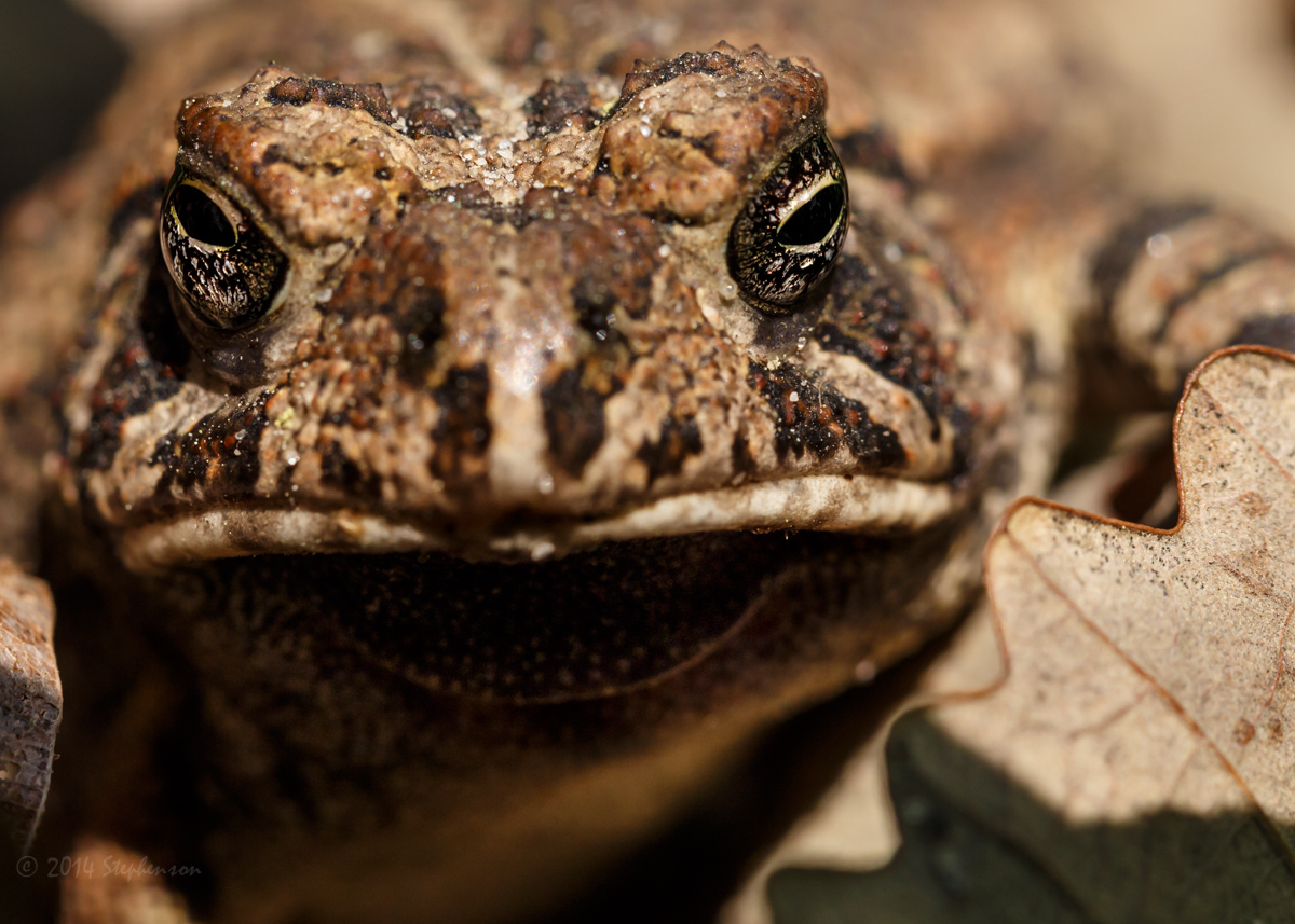 Daisy Toad.jpg