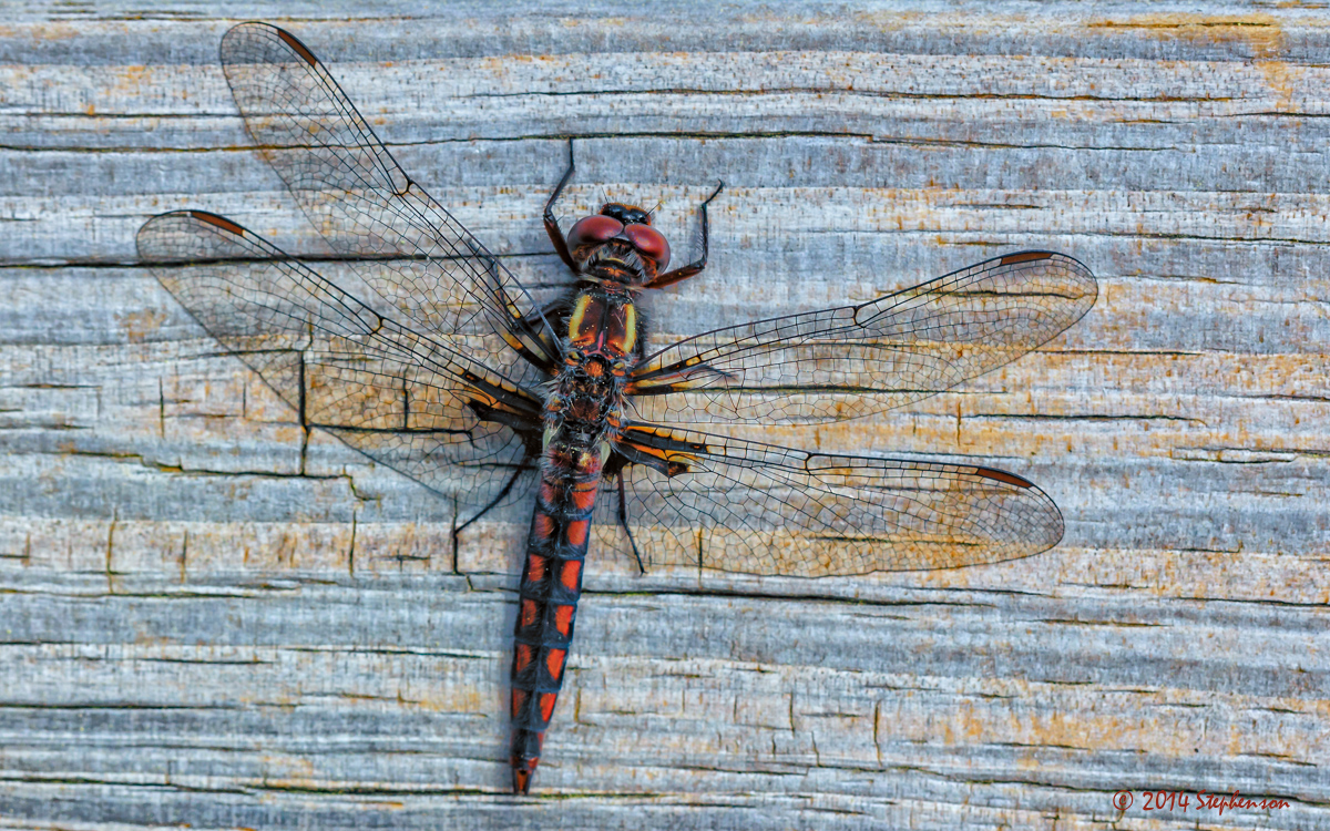 Dragonfly 3.jpg