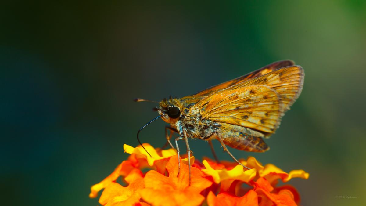Nectar Sipping-2.jpg