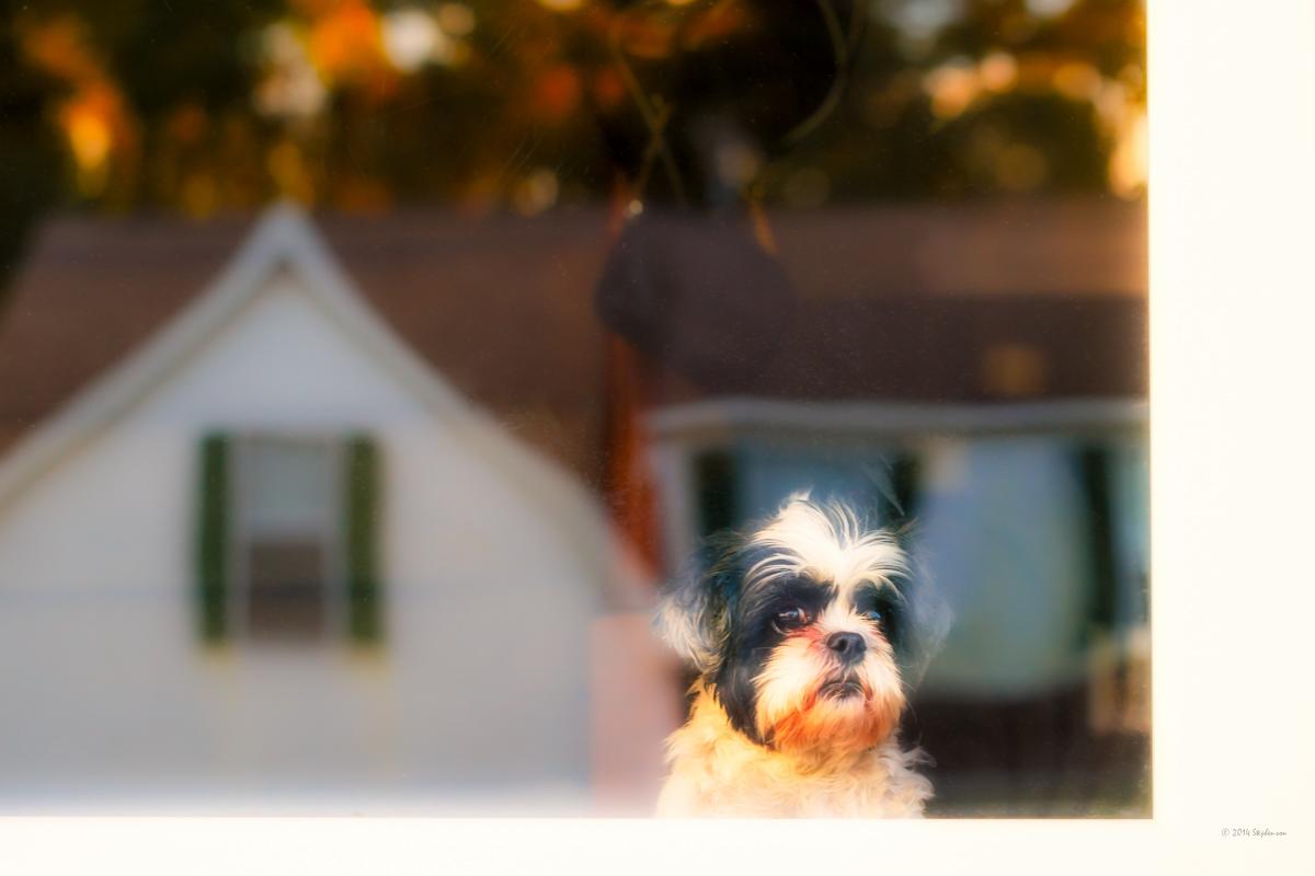 Doggy in the Window.jpg
