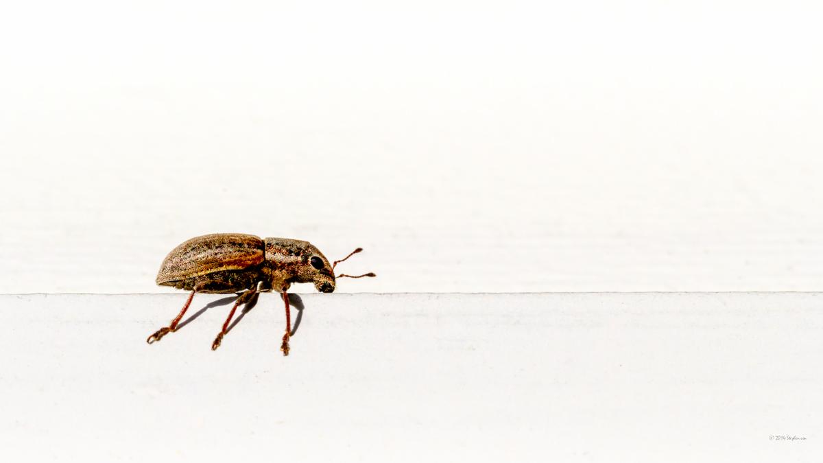 Little Bug.jpg