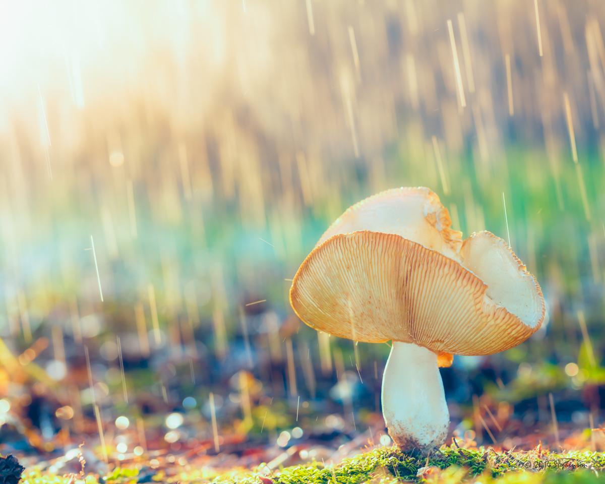 Rain on a Toad Stool.jpg