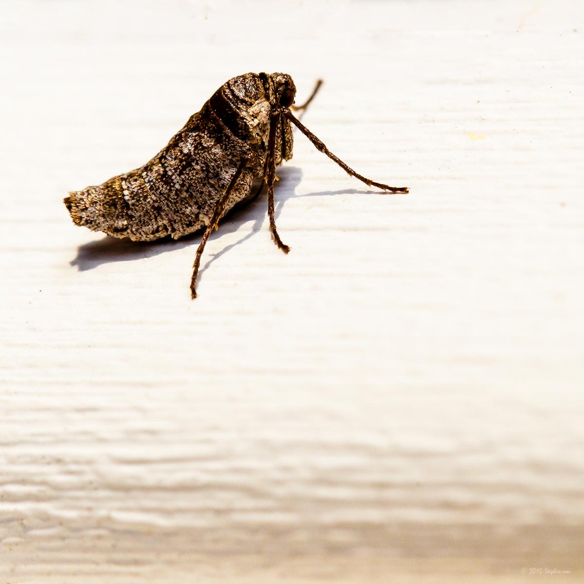 little bug-2.jpg