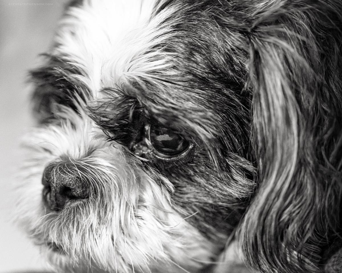 Milo Monochrome