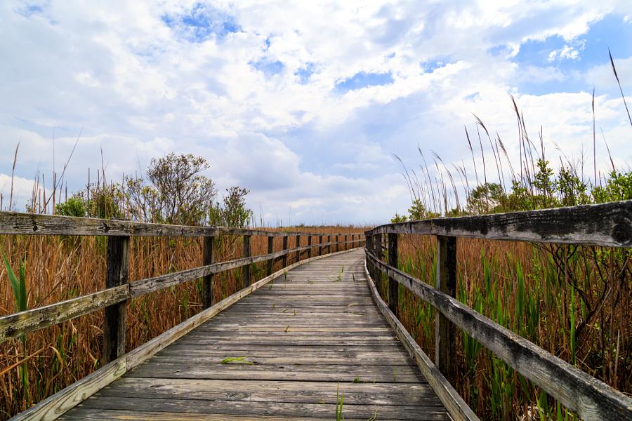 Back Bay Trail