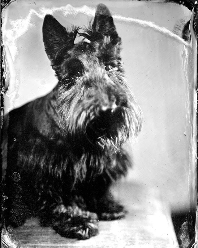 Mack & Ruby sit for their tintype