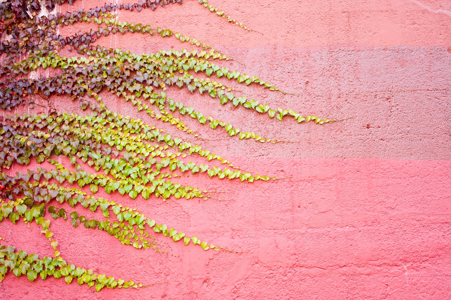 pink wall wave on elston