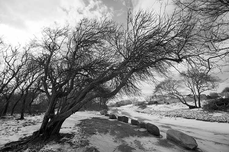 These are the wind sculptured trees on the way back to the parking lot at Mansion Beach.  That wind, it's always doing something.  And for those of you who like to go swimming at Mansion Beach....you will note that at this time of year there is plenty of parking.
