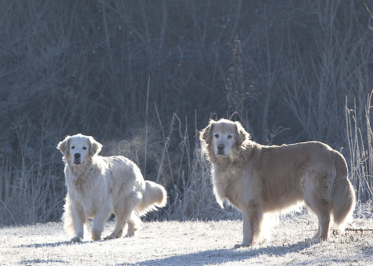 Wilson is on the right... he's almost 10.  And Molly is almost 5.