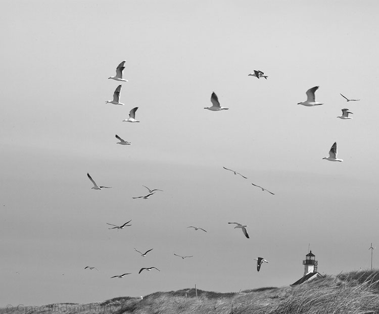 A nice picture of seagulls, as well as North Light, which I normally would have appreciated.