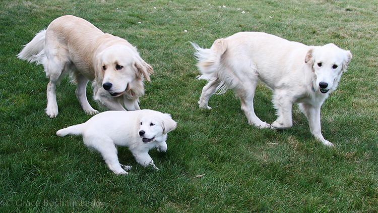 This is Jonesy as a puppy, Molly at one year old, and Molly's brother Barkley. All at our house on Block Island.