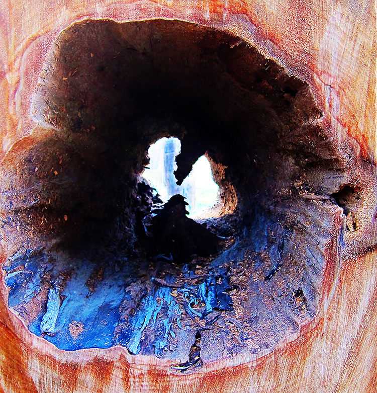 This tree came down a big storm in 2011.  I love the red wood grain and the cobalt blue interior.