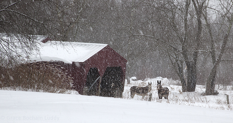 Here are the donkeys in the barn by the house. They were waiting in the same place as they were when we set out.