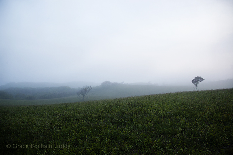 Early evening and light fog in Rodman's Hollow.