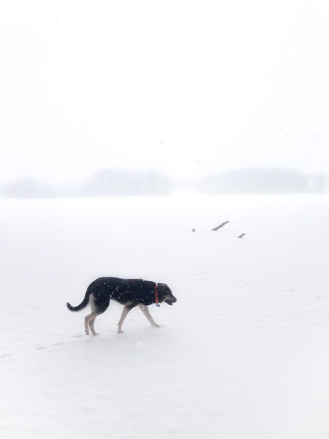 winter's_back-01.jpg