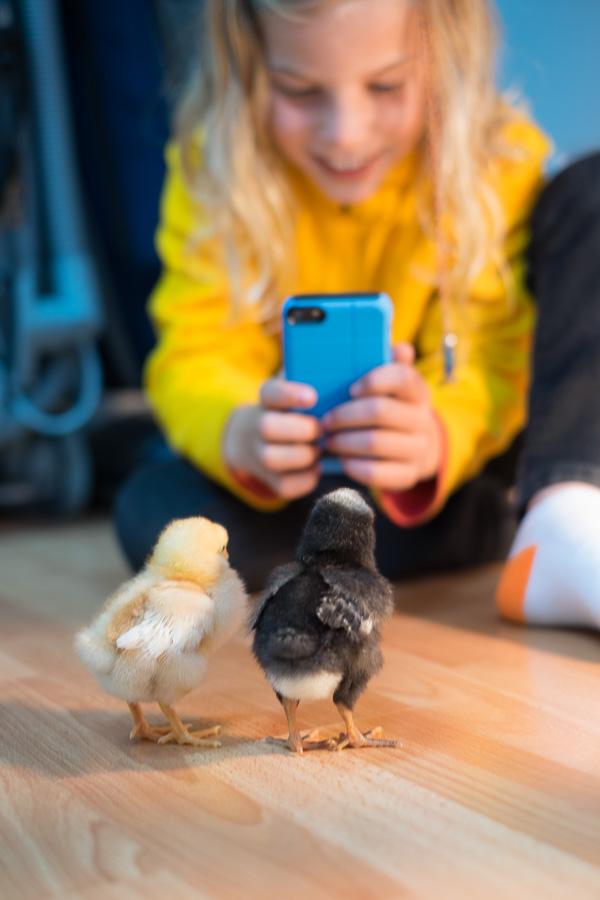 Chicks-09.jpg