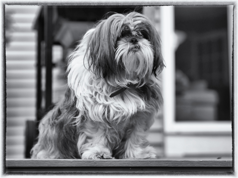 Zoe the wonder dog.