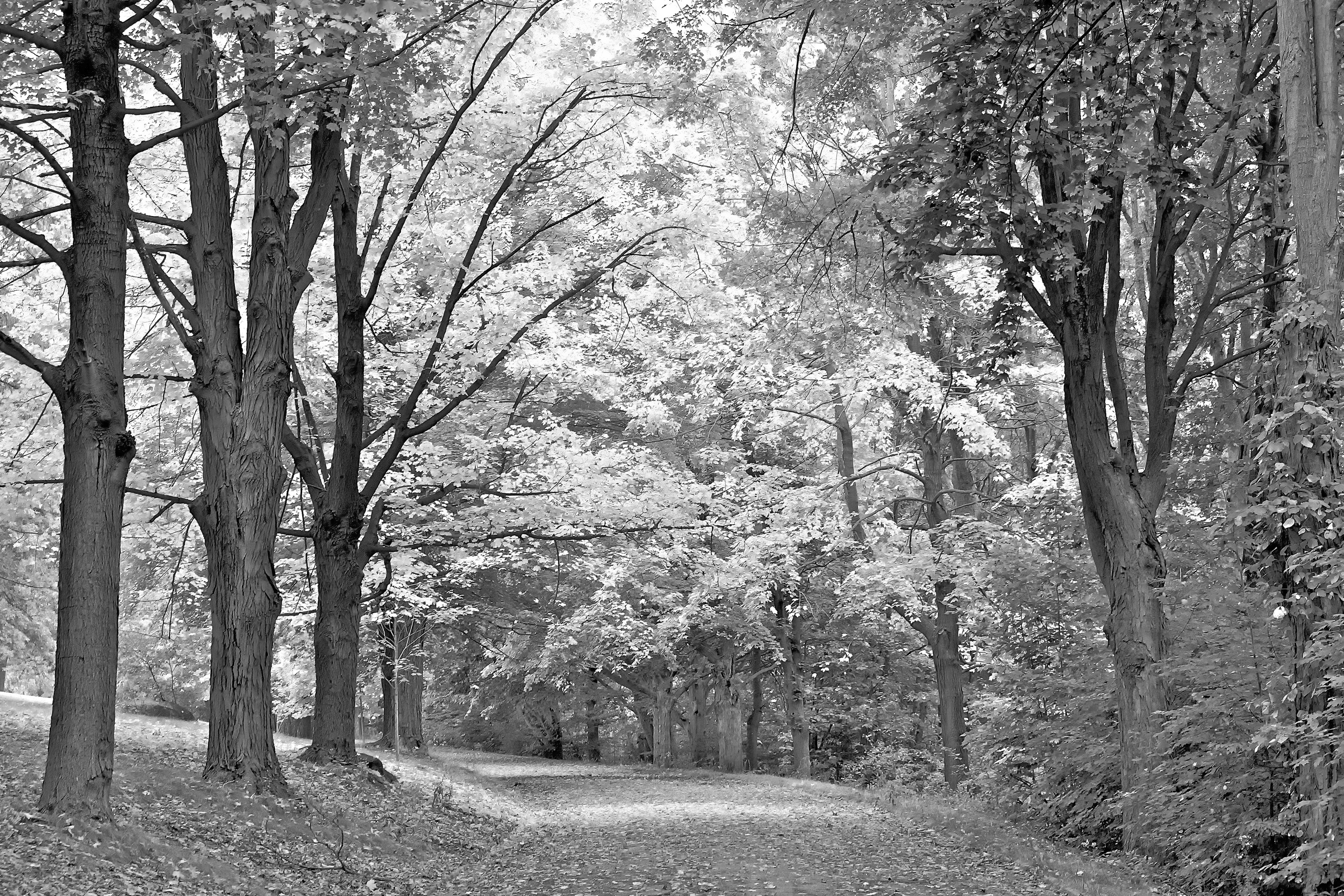 Trees, Fort Hill Park.jpg