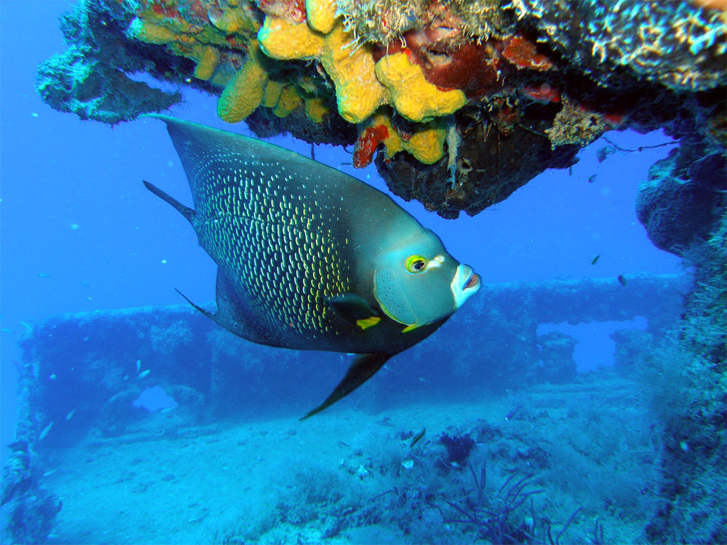 Coral area - John Pennekamp Beach - Key West, FL