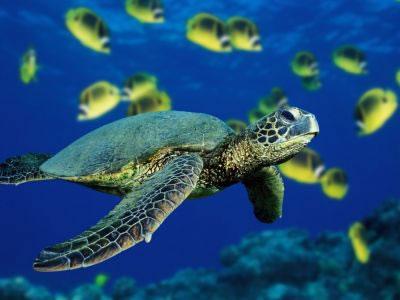 St John Snorkeling & Scuba Diving, St John, Virgin Islands