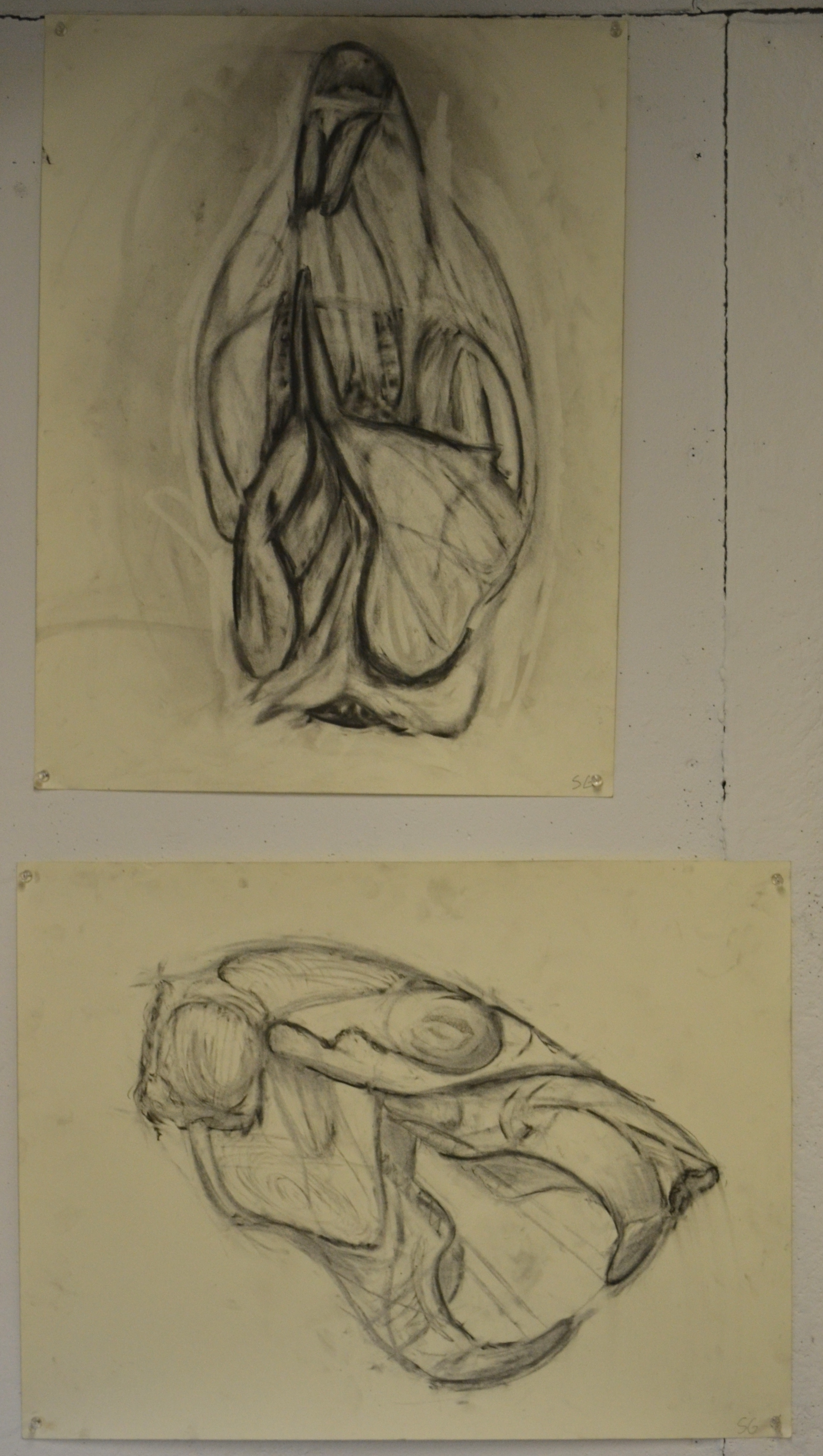Charcoal Scull Studies