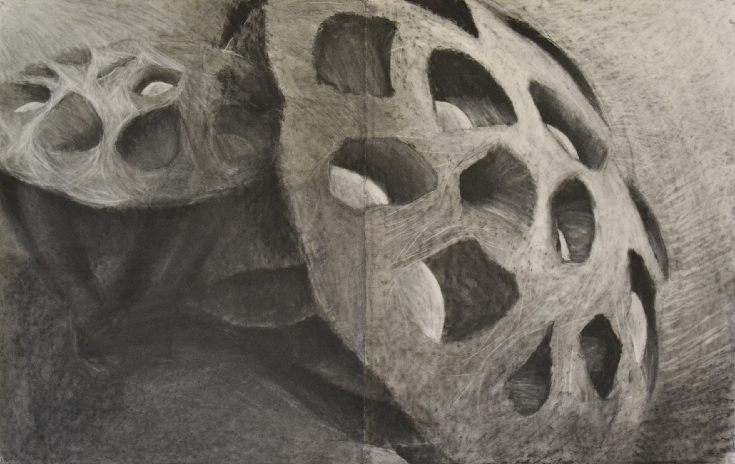Charcoal Seedpod Drawing
