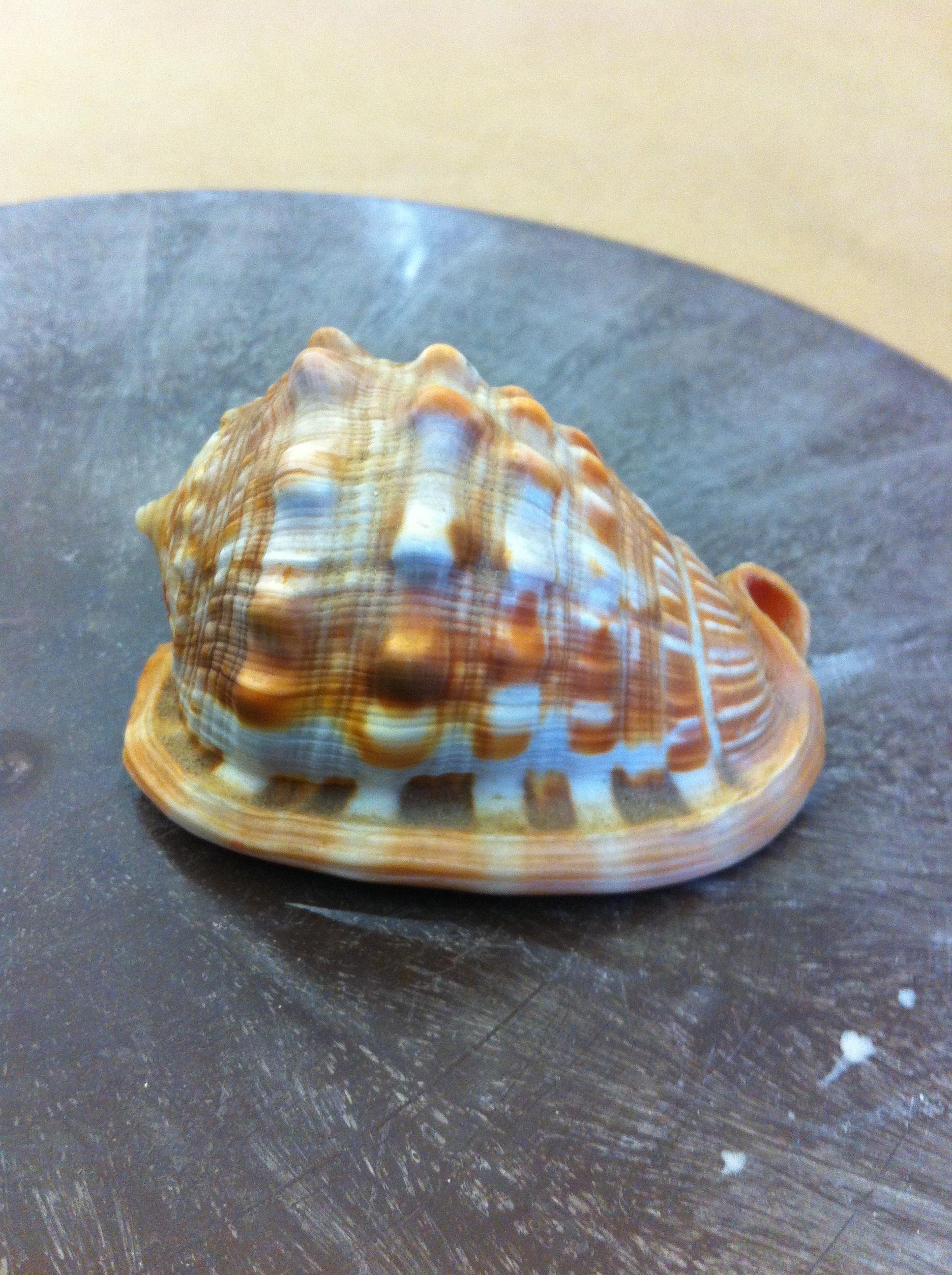 Image of Inspirational Cameo Shell