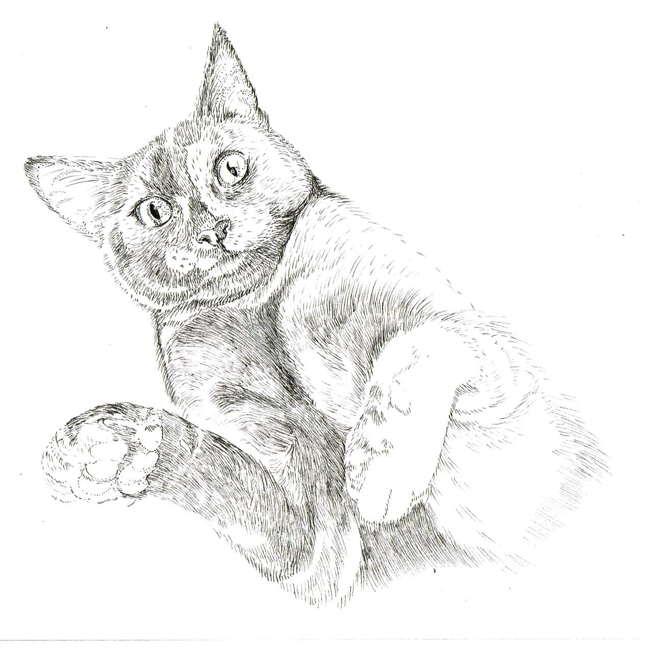 thumbnail_kevin the cat .jpg