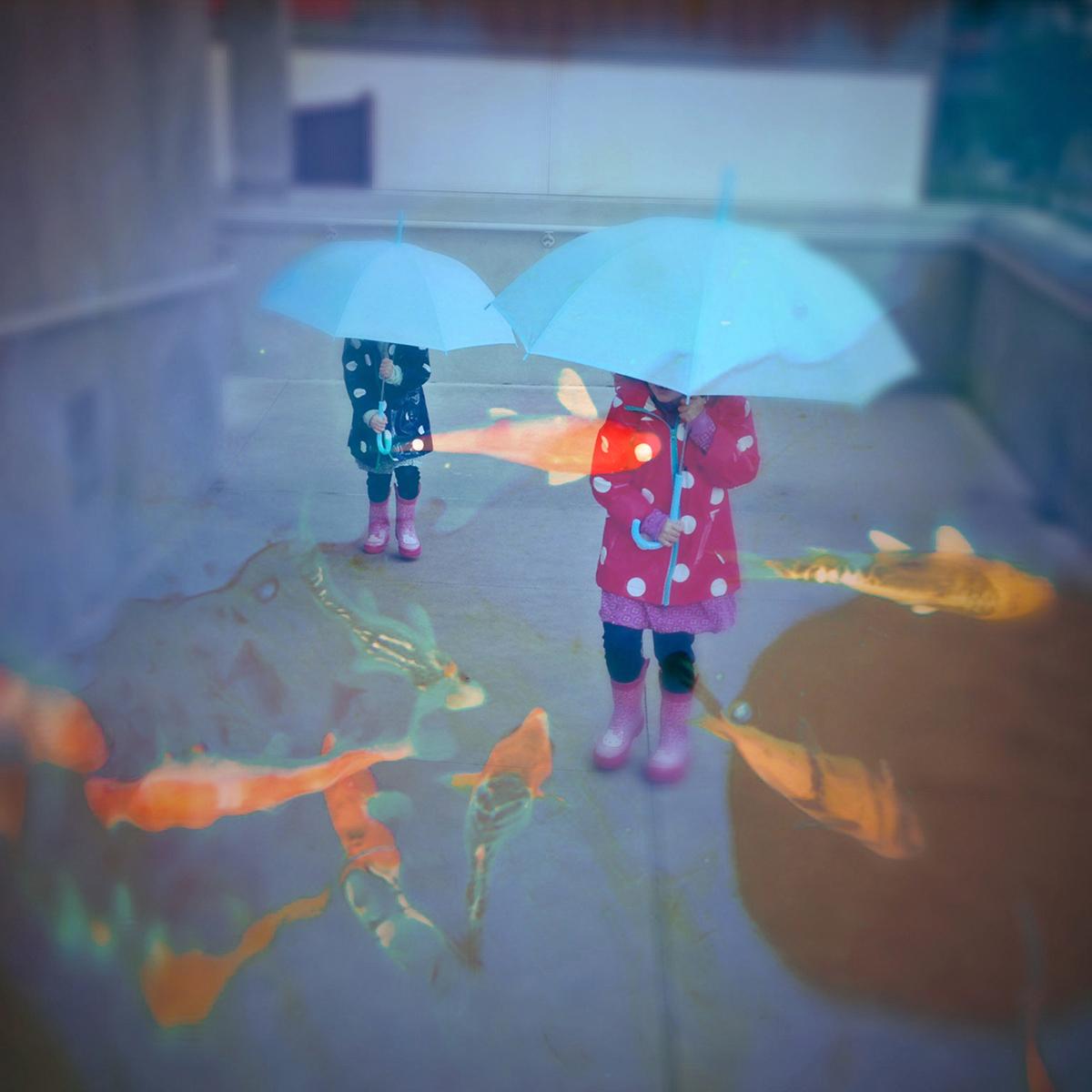 Fish Rain.jpg