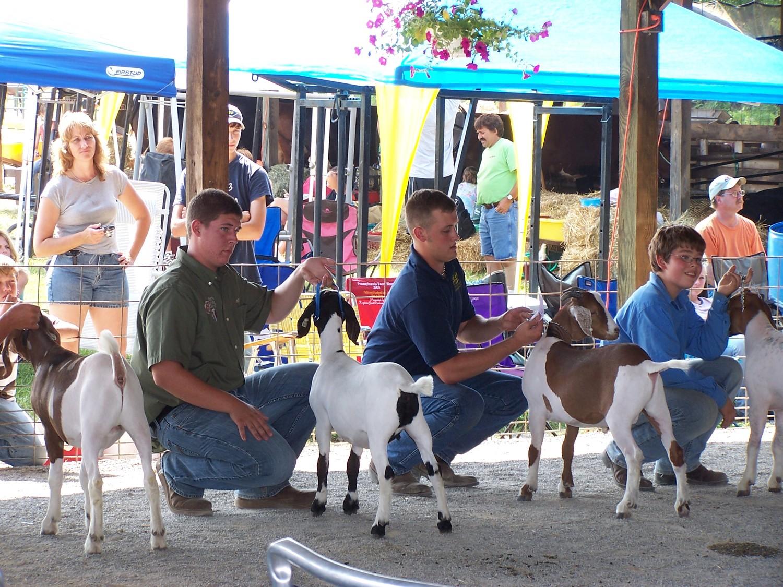 Livestock — Shippensburg Community Fair