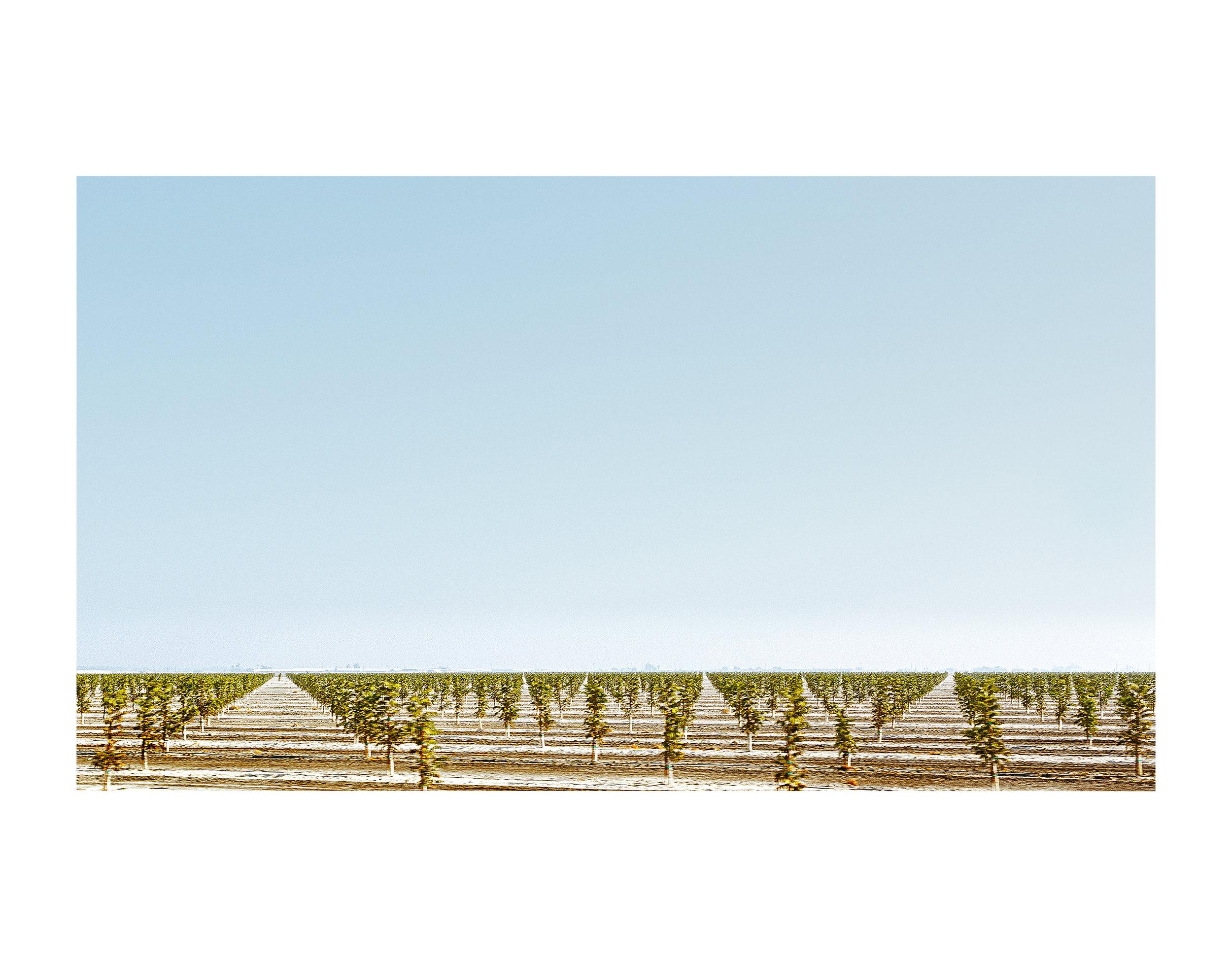Graphic Vineyard, Central; 2014