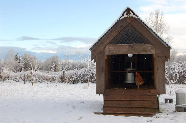 The hen house of Jessica Helgerson. Photographed by Lincoln Barbour.