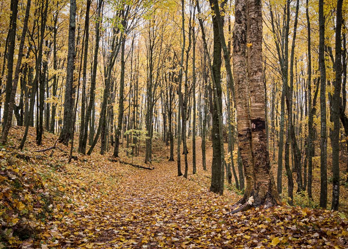 Trail to Miners Falls