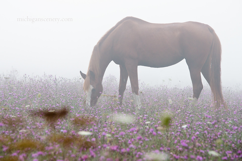 MI14-0575-6660 Misty Morning Meadow by Aubrieta V Hope Michigan Scenery.jpg