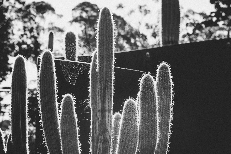 Kara_CactusEdit_04.jpg