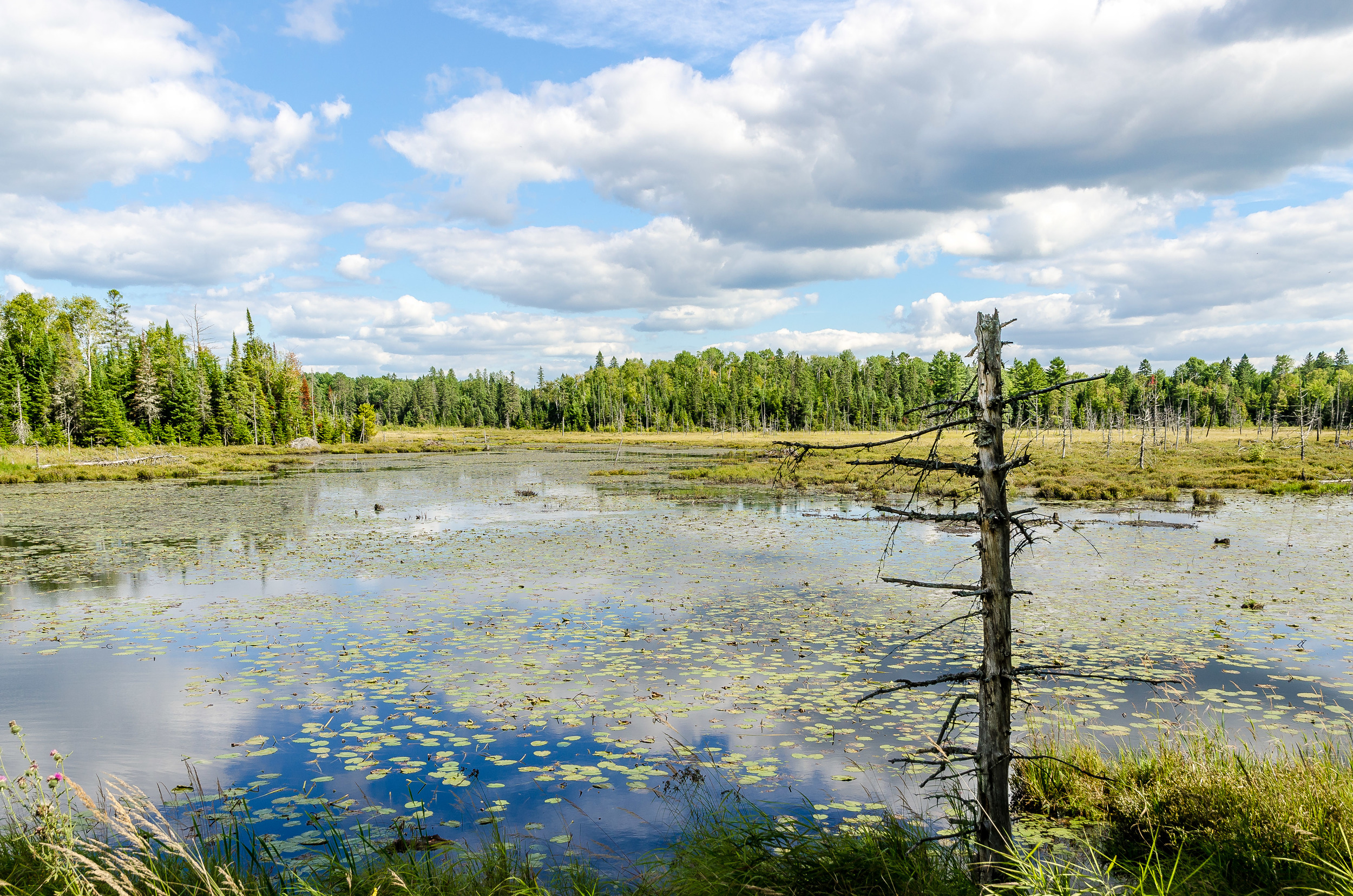 Bark Lake Marsh.jpg