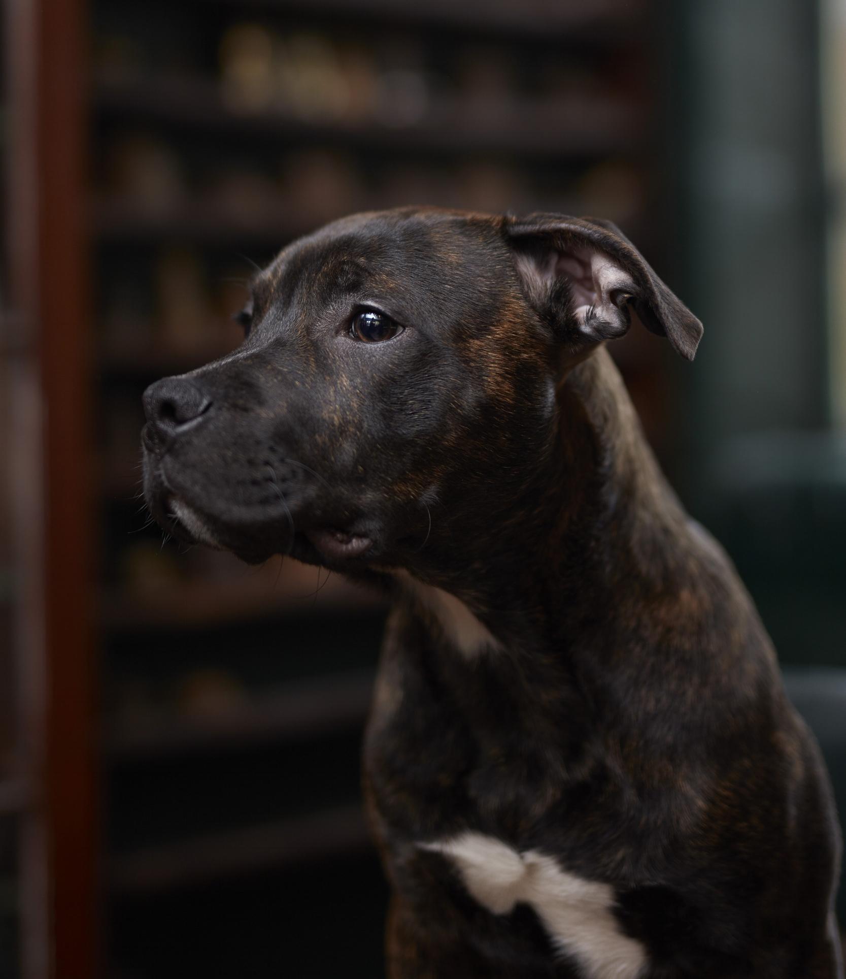 Archie Struthers  Watch Dog