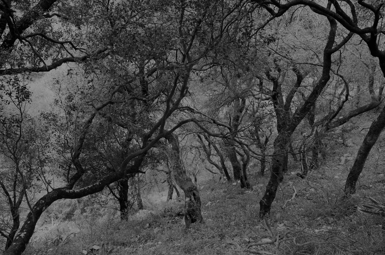 ©Antigoni Papantoni, 2013, Echoes05.jpg