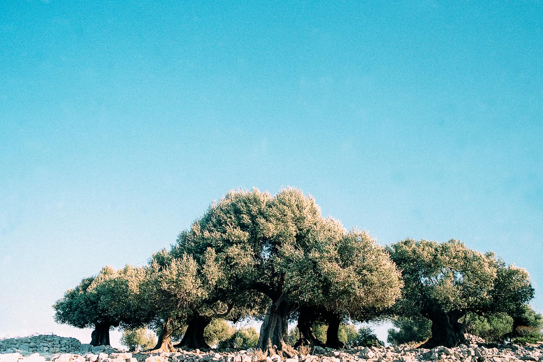 ©Antigoni Papantoni, (Re) Decompose, 2016-8.jpg