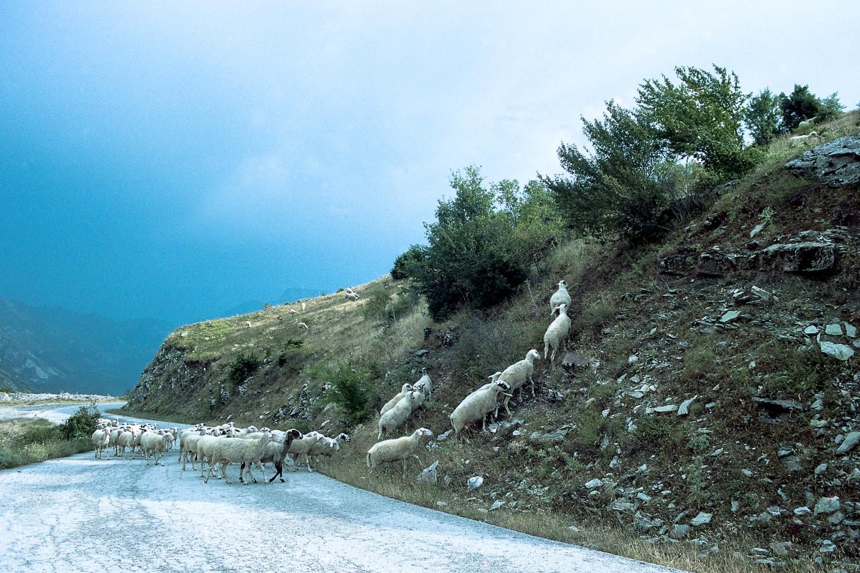 ©Antigoni Papantoni, (Re) Decompose, 2016-9.jpg