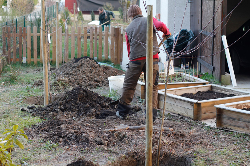 Filling in the holes with yummy earthy goodness for our new fruit trees.
