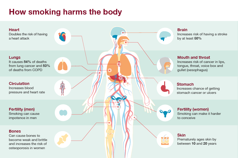 how smoking harms the body.png