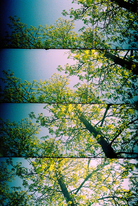 01lomography_foto_Mankica_Kranjec.jpg