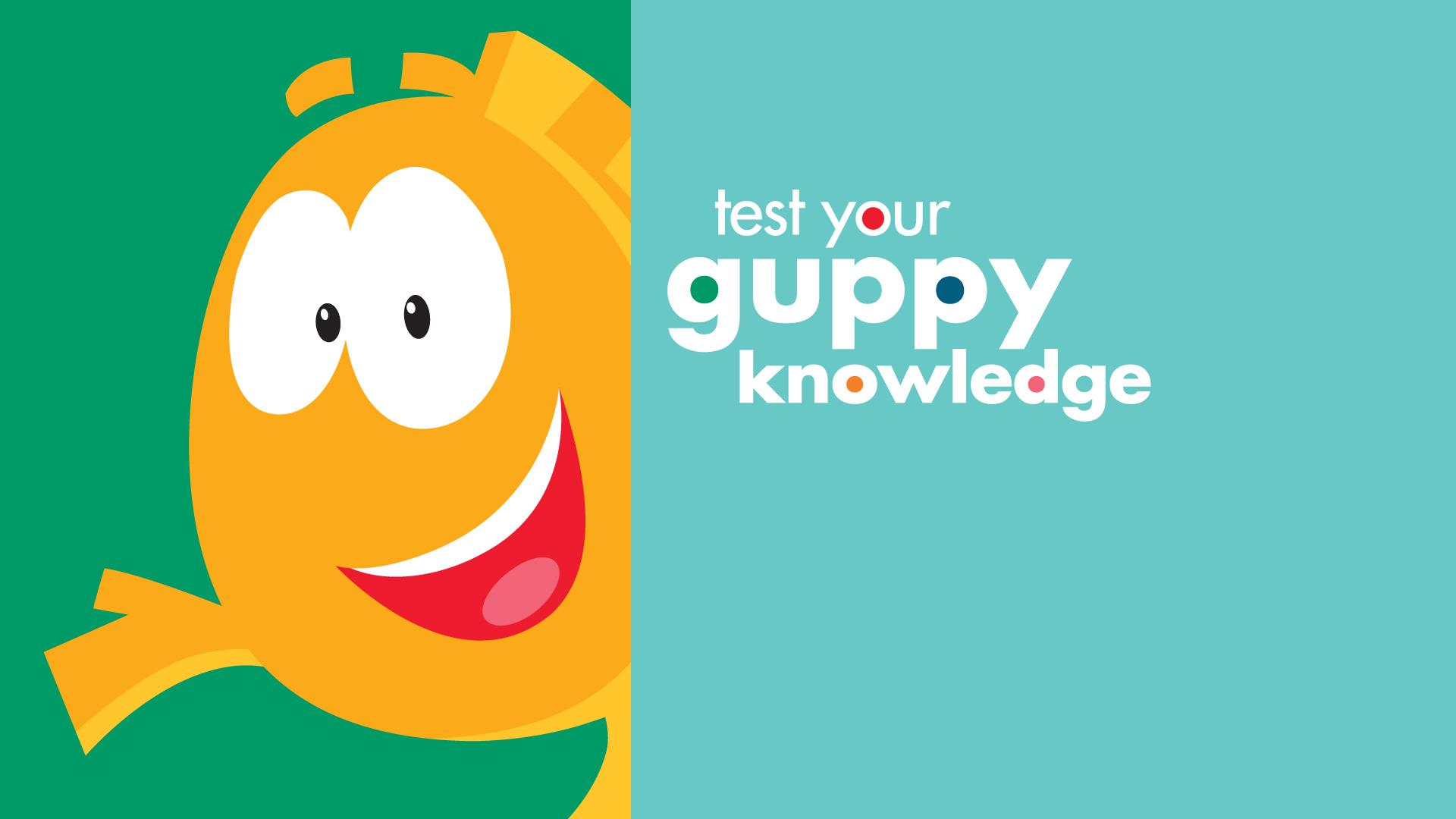 SuperFanSunday_BG_Trivia_Mr.Grouper_Knowledge.jpg