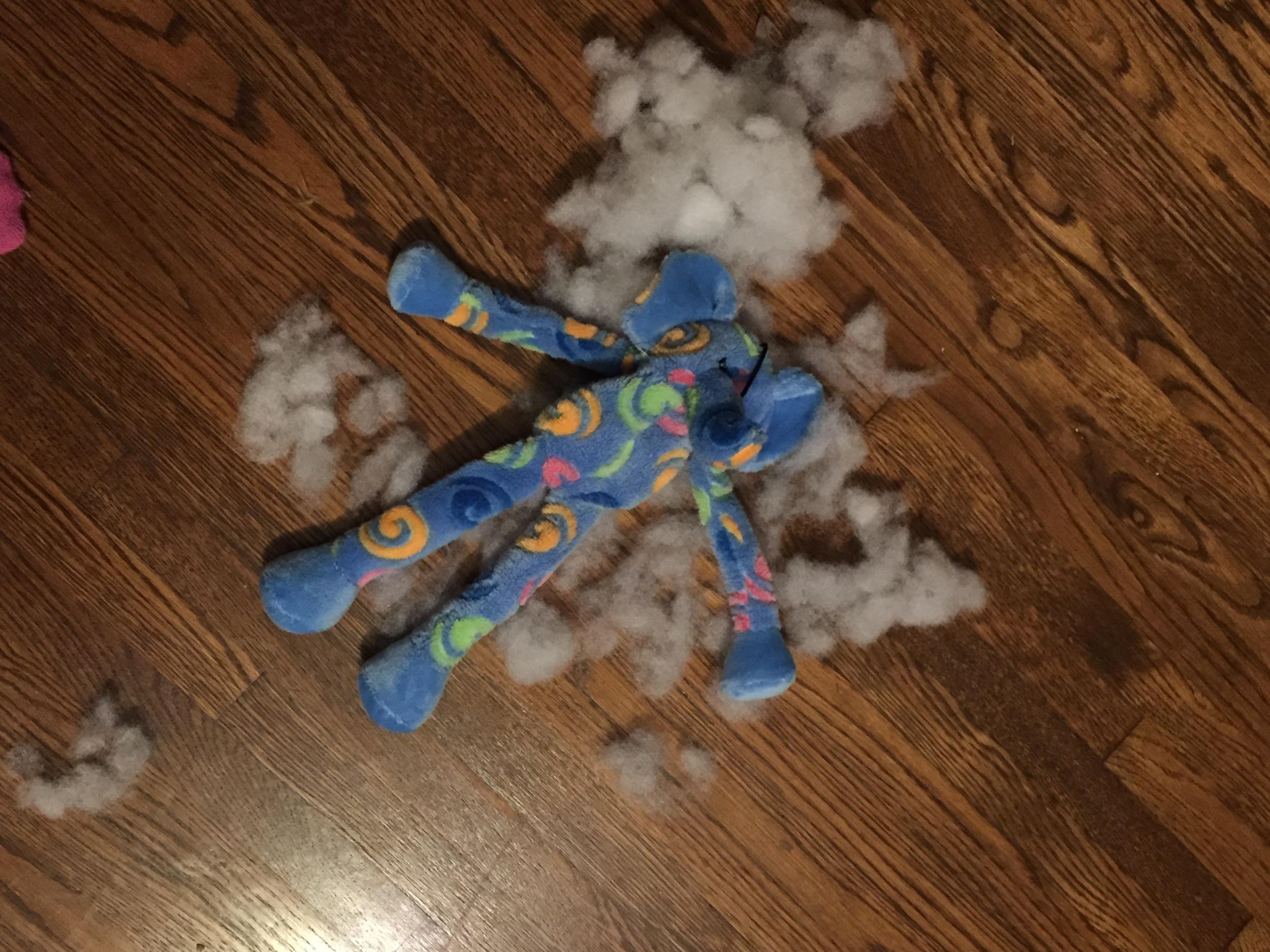 Swanson had a fun Friday night. Mr. Elephant did not.