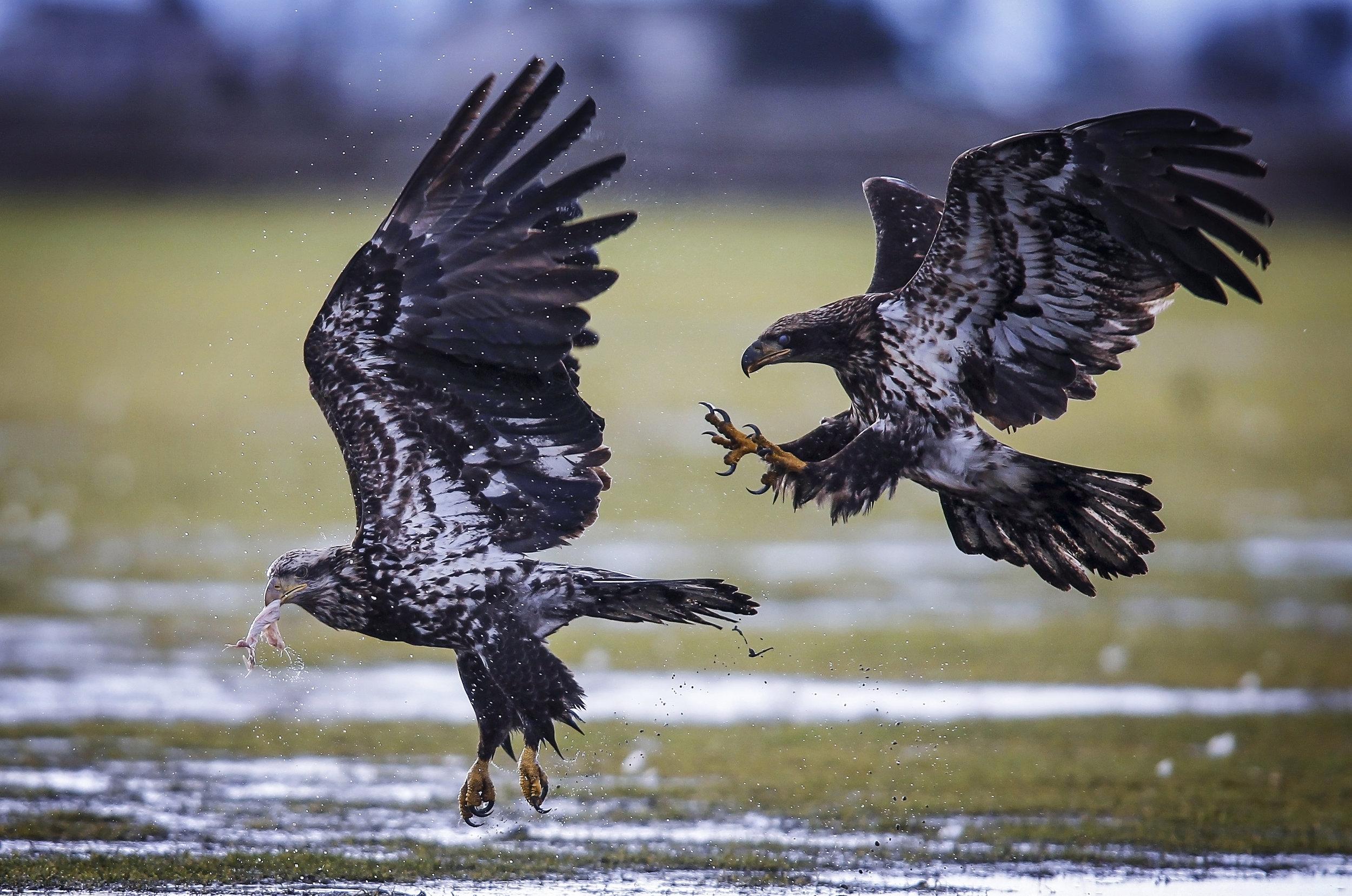Feb17.EaglesDelta1086.JPG