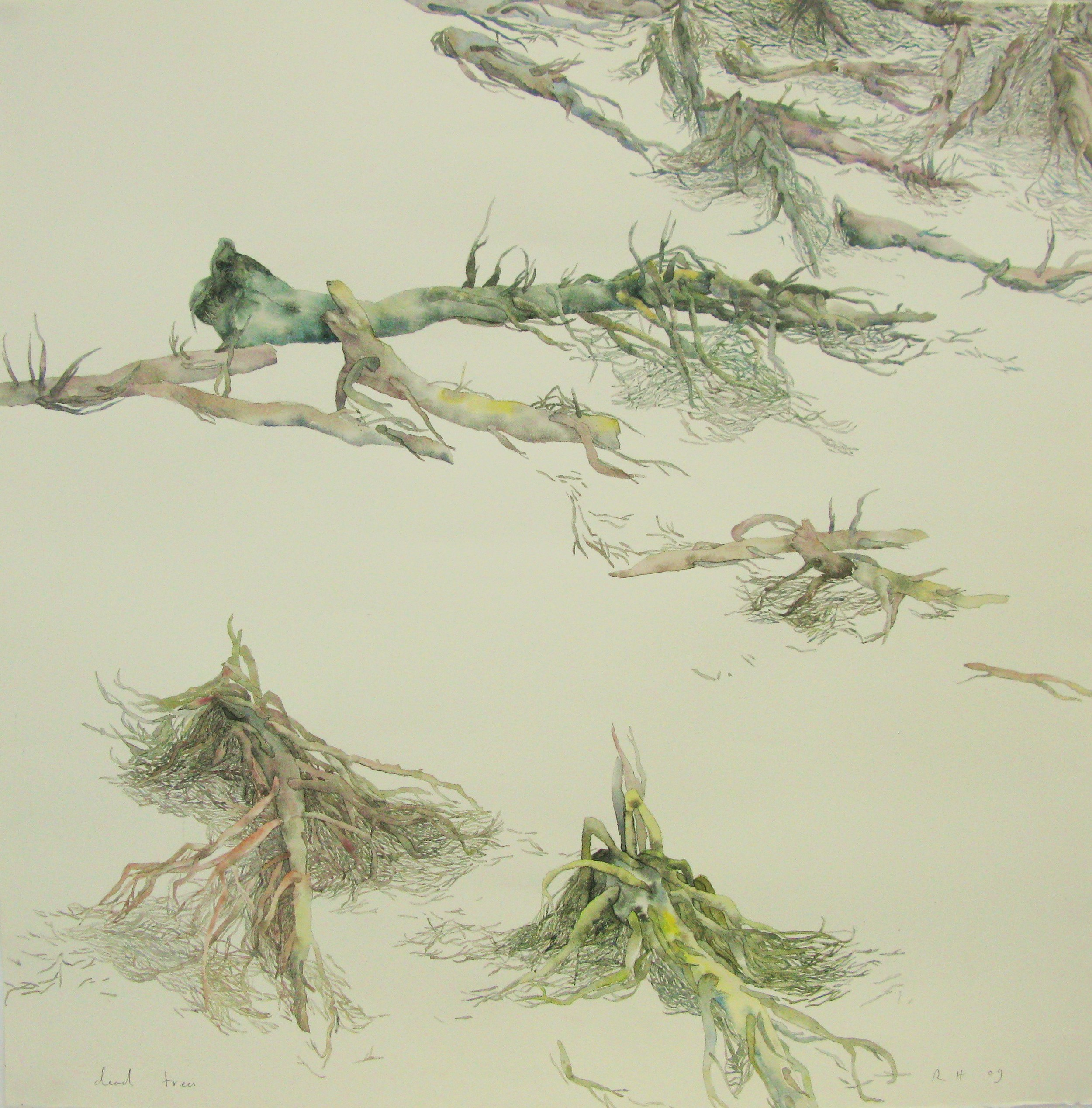 dead_trees.JPG